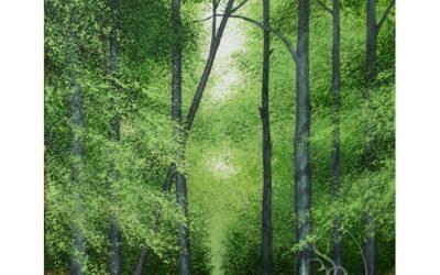 Holt Down Woodland