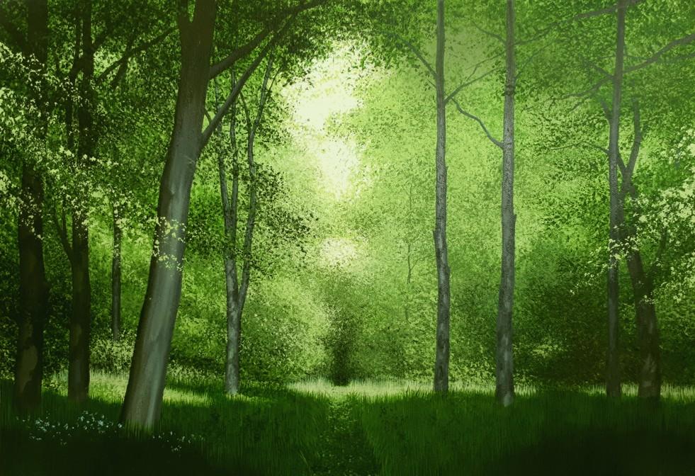 Woodland Path by Steve Bonner